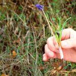 iris-tsagarada-botanologia-09
