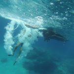 pelion-diving-pelion-gallery-4-1024